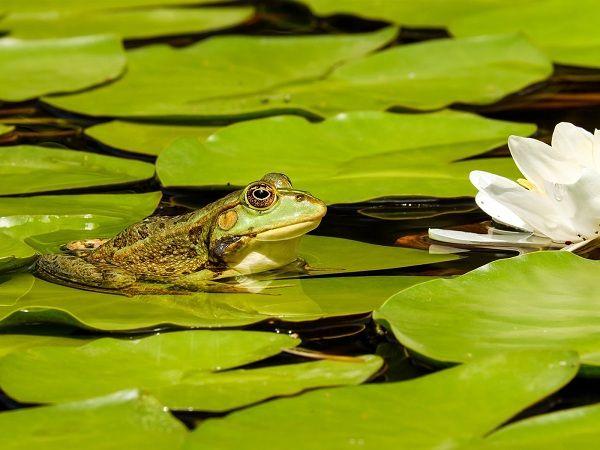 Mơ thấy ếch đánh con gì chính xác?