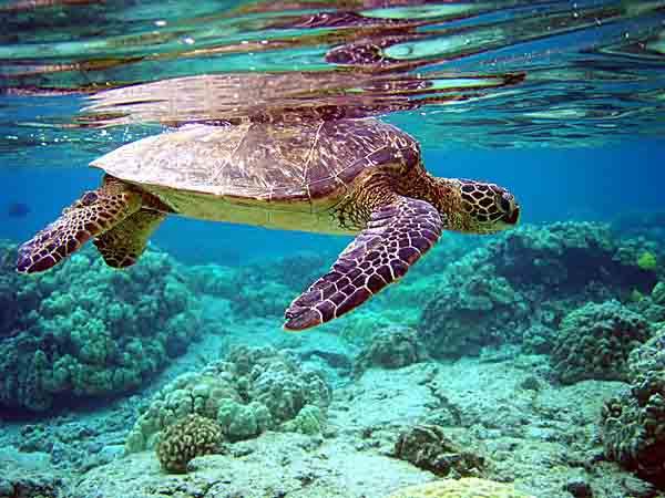 Nằm mơ thấy rùa đánh con gì ăn chắc, báo hiệu điềm gì