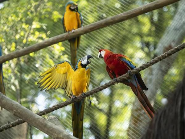 Mơ thấy con vẹt là điềm hên hay xui? Ghi ngay số mấy?
