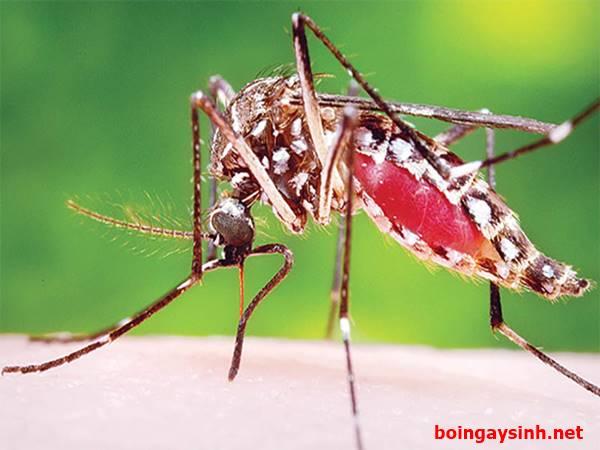 Nằm mơ thấy muỗi mang đến điềm báo gì? Đánh số mấy